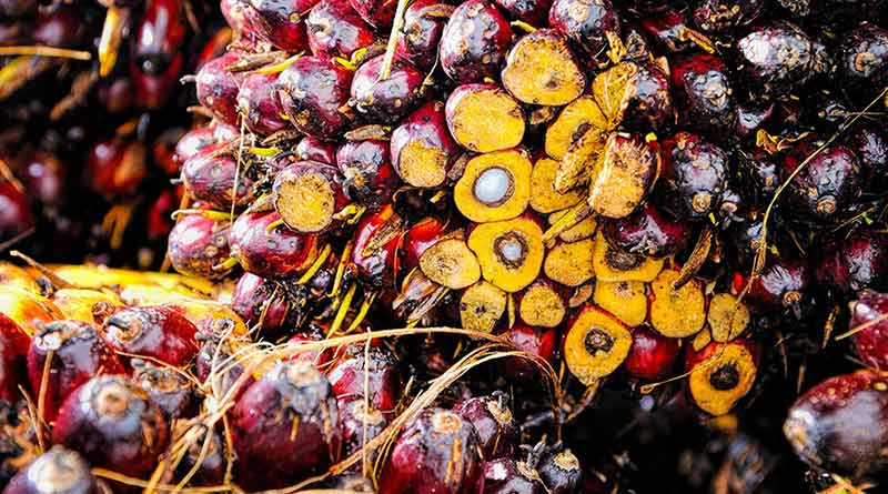 Palm Oil is not Saturated Fat